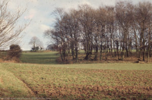 Oak, birch, beech spinney pasture, arable. ORs ridge, East of Tongwynlais Wood. 4 Feb 1972