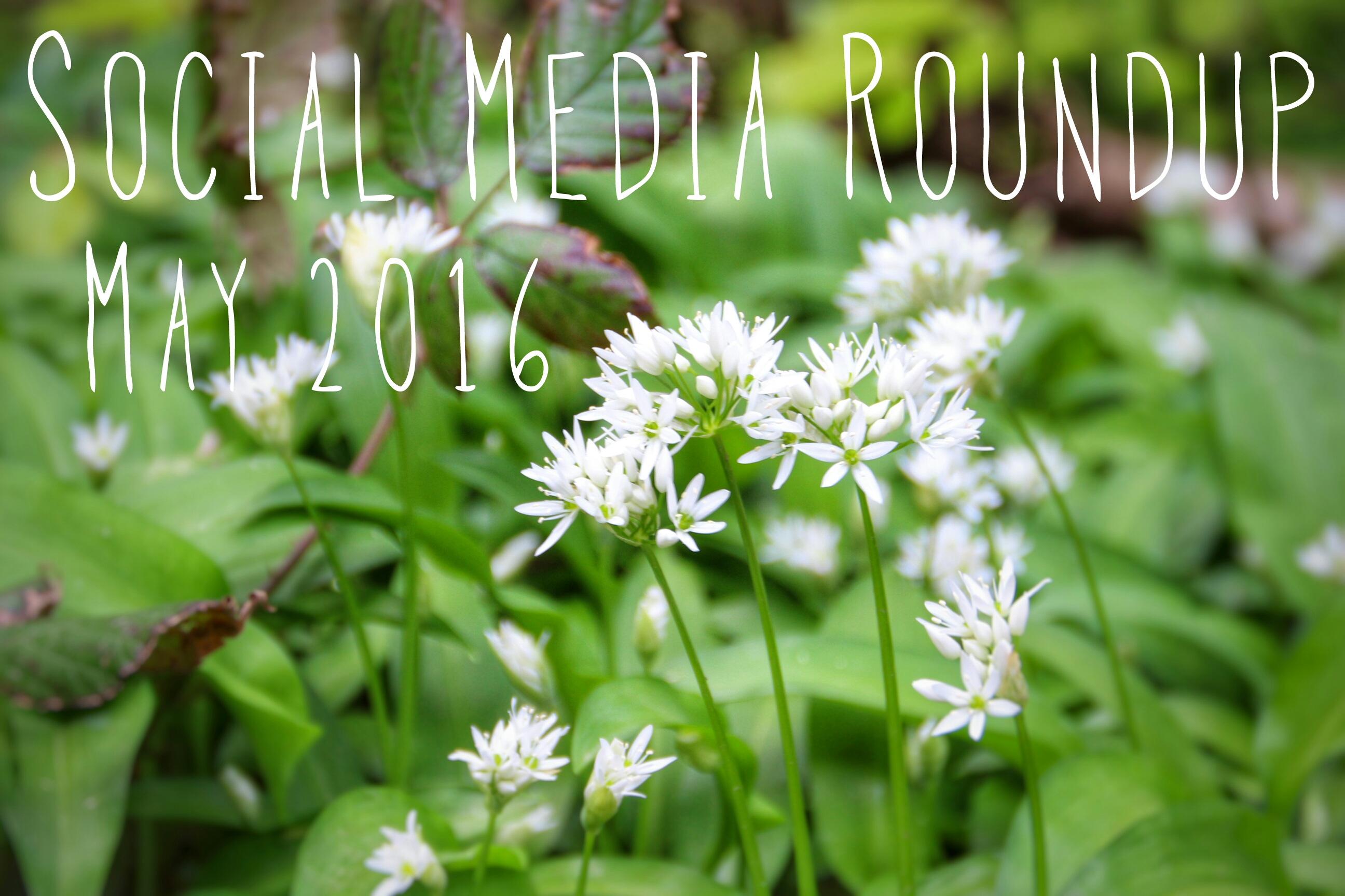 Social Media Roundup May 2016 header