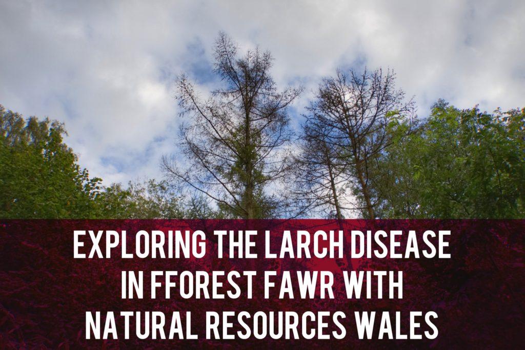 Fforest Fawr exploration header