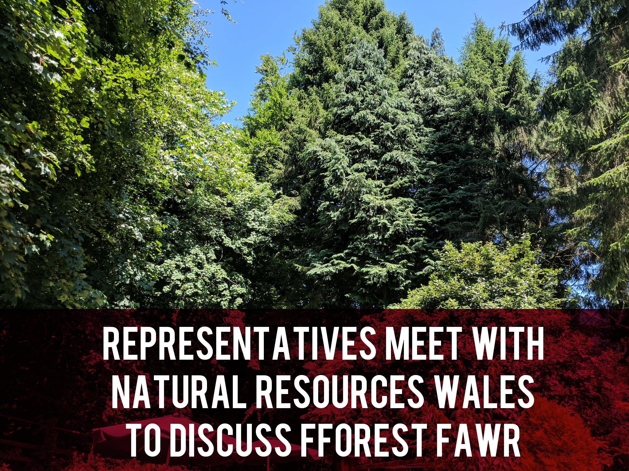 Representatives Meet with Natural Resources Wales to Discuss Fforest Fawr