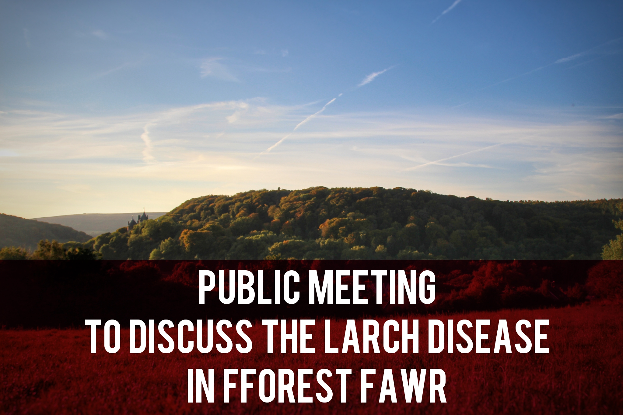 Public meeting to discuss larch disease in fforest fawr header