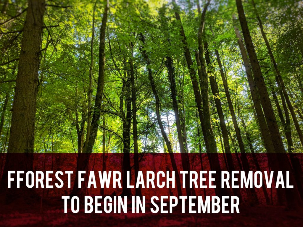 Fforest Fawr Larch Tree Removal header