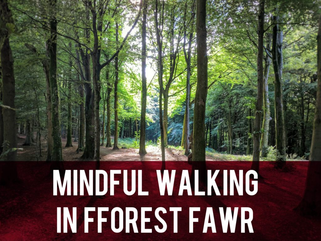 Mindful walking in Fforest Fawr header