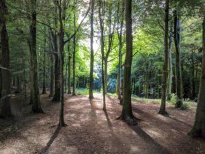 Fforest Fawr woodland