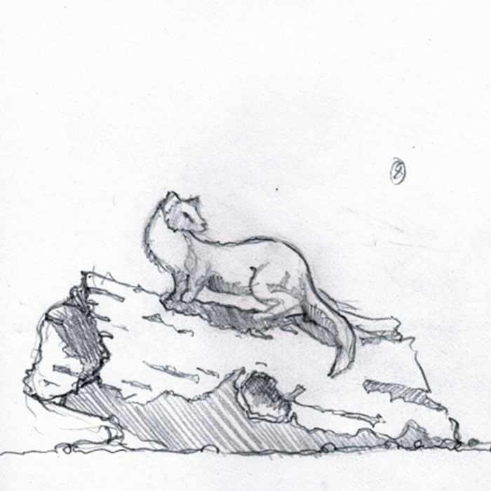 Drawing of a sculpture of a pine marten